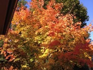 Herbsteindruck Potsdam-Babelsberg